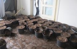 Wietplantage voor ontruiming door Woningontruiming Regionaal